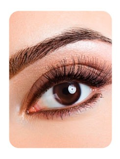 Brow Definition (Kit)